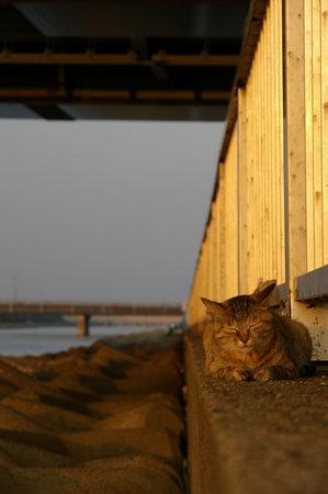 眠り猫 その1